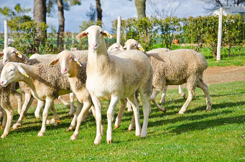 La calidad de vida de nuestro ganado factor clave en la calidad de la leche