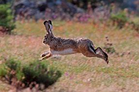 Caza del conejo en Las Terceras