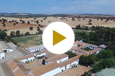 Video aereo de la finca Las Terceras