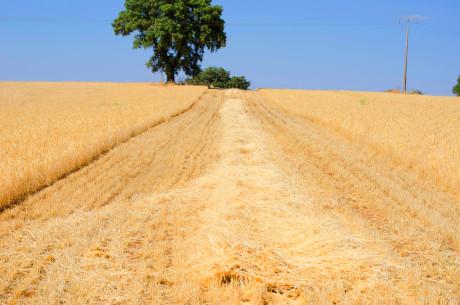 Agricultura en La Mancha