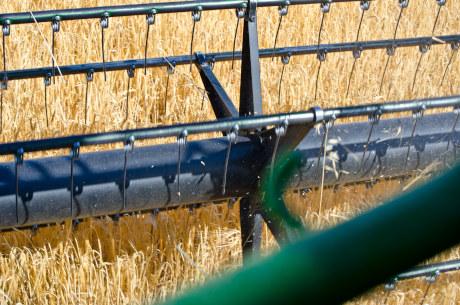 Cereal de los campos manchegos