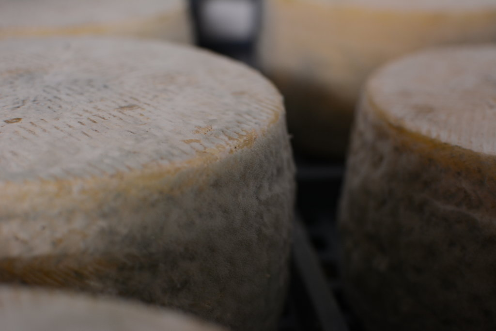 Moho Manchego cheese