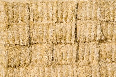 Finca Las Terceras, donde pastan las ovejas para elaborar el mejor queso manchego artesano
