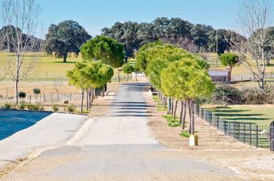 Camino de acceso principal a la finca Las Terceras